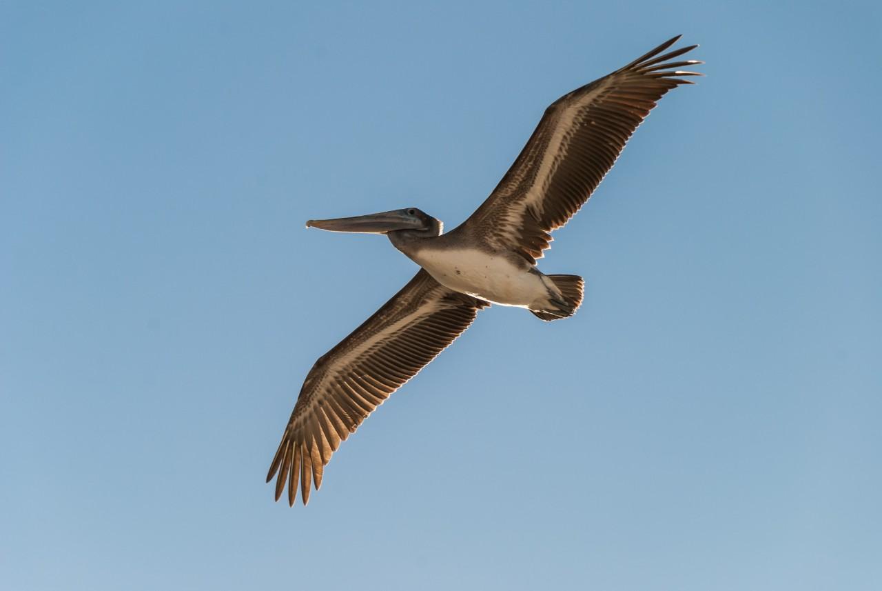 Pelican | Suzanne Polino REALTOR